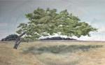 """Weather Vane""  oil on canvas 76x122cms"